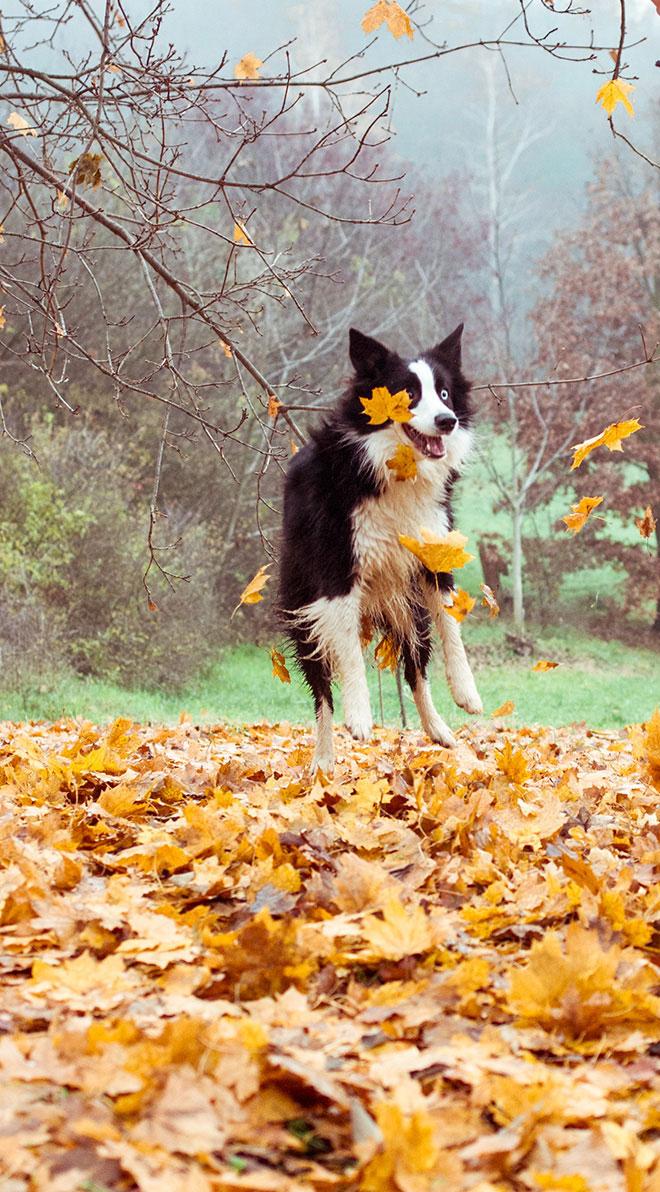 harufoto autumn 01