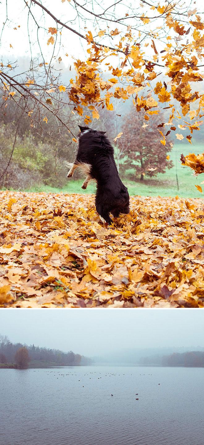 harufoto autumn 1