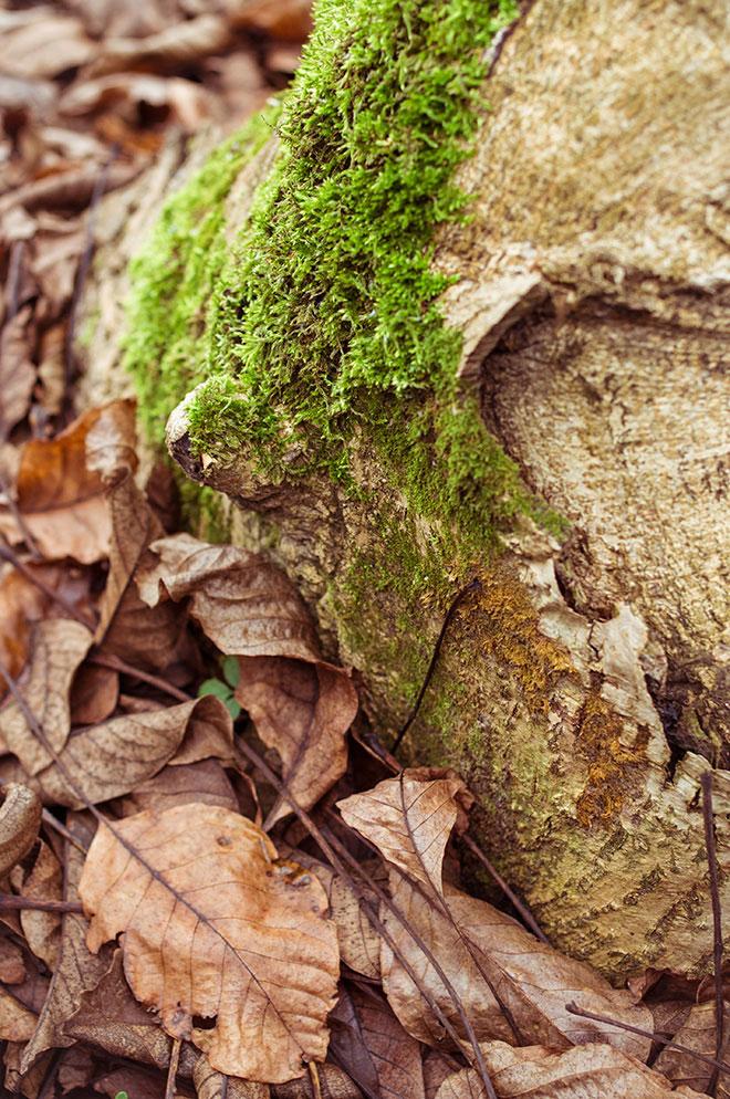 harufoto autumn 17