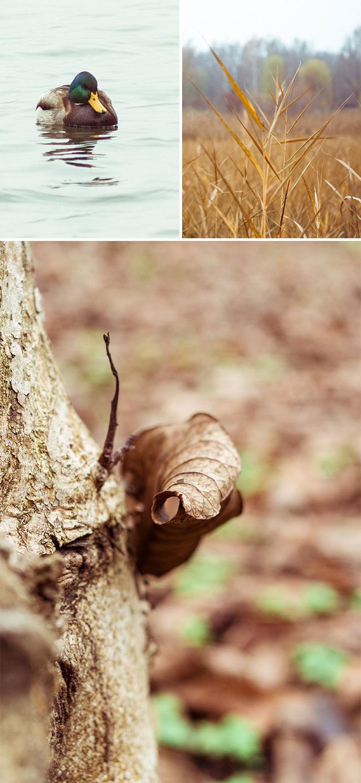 harufoto autumn 4
