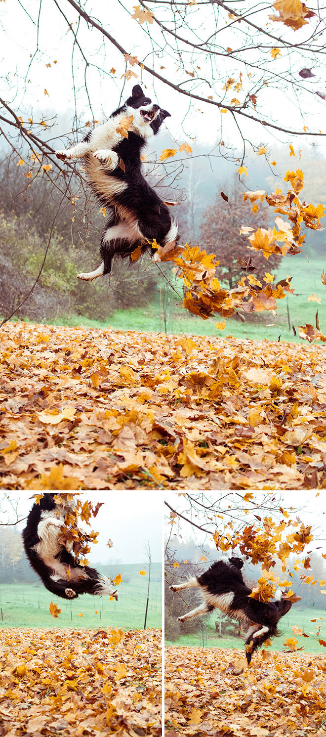 harufoto autumn 7