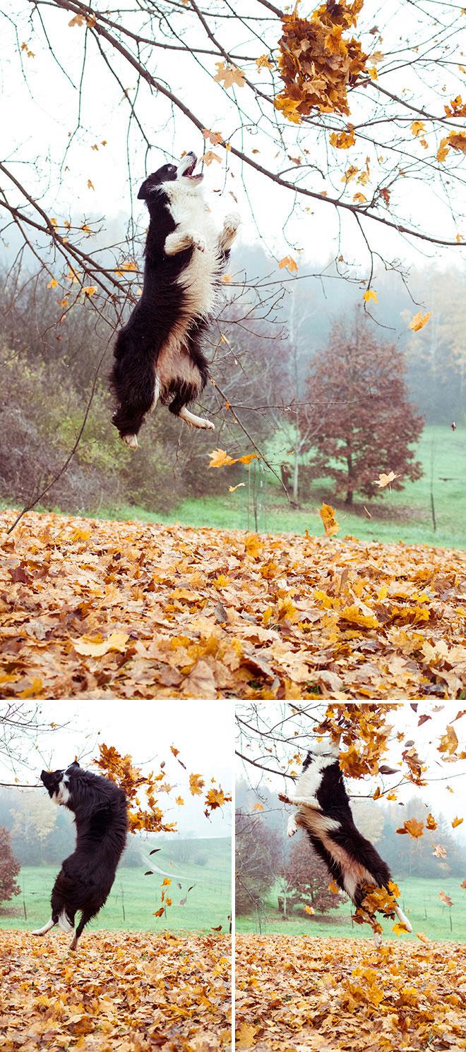 harufoto autumn 9