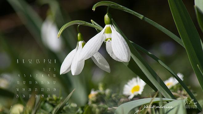 2013 márciusi naptár háttér