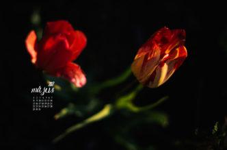 természet fotós Haru Fotó