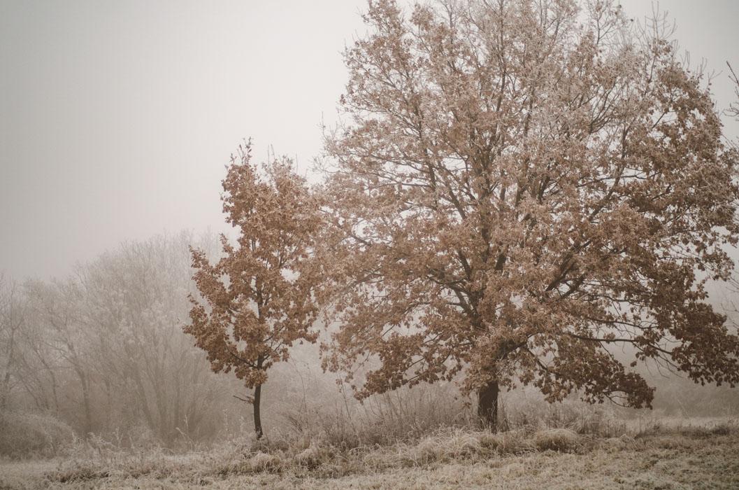 téli táj fotózás