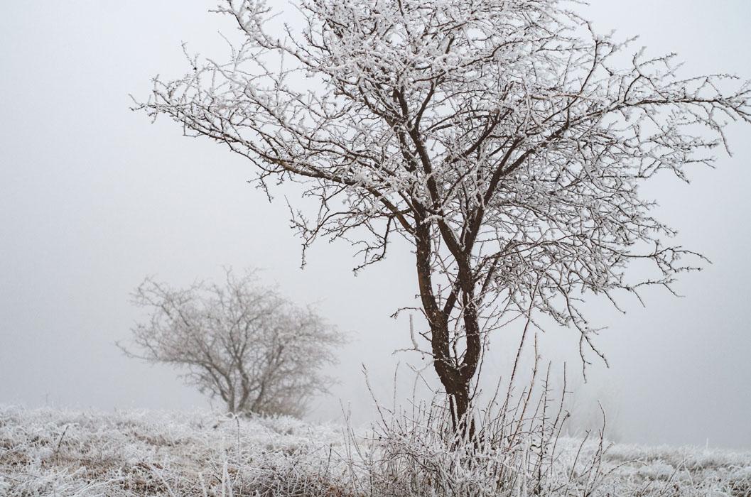 téli táj Hosszúhetény Haru Fotó