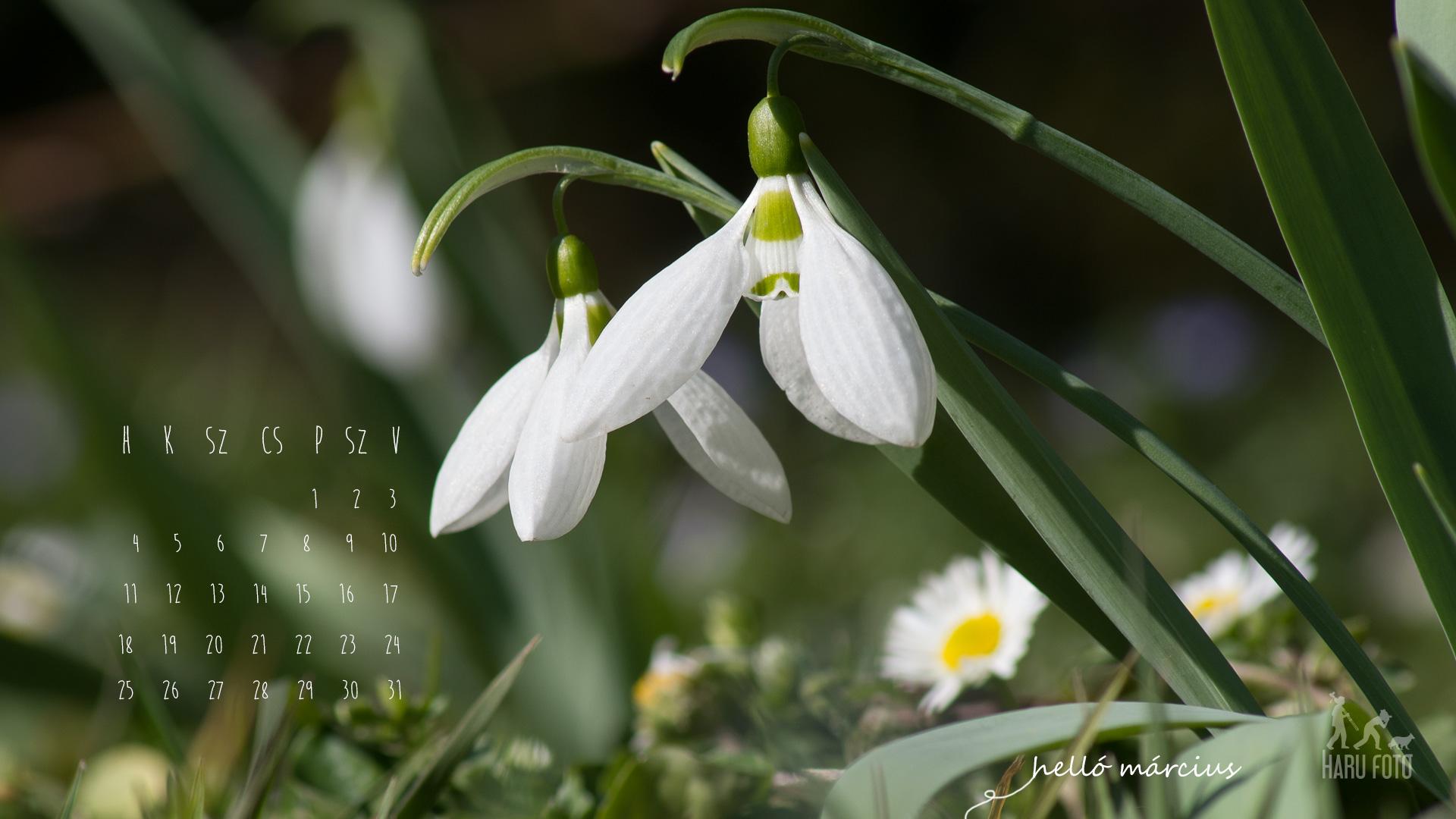 februári naptár háttérkép 2013 márciusi naptár, hóvirág háttér | Harufoto a kreatív műhely februári naptár háttérkép