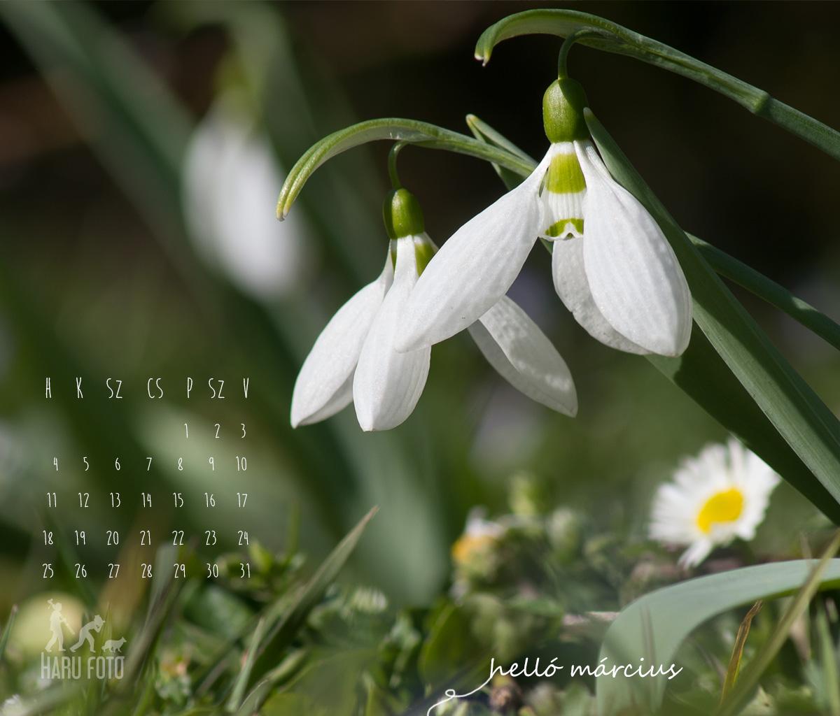 naptár háttérnek 2013 márciusi naptár, hóvirág háttér | Harufoto a kreatív műhely naptár háttérnek