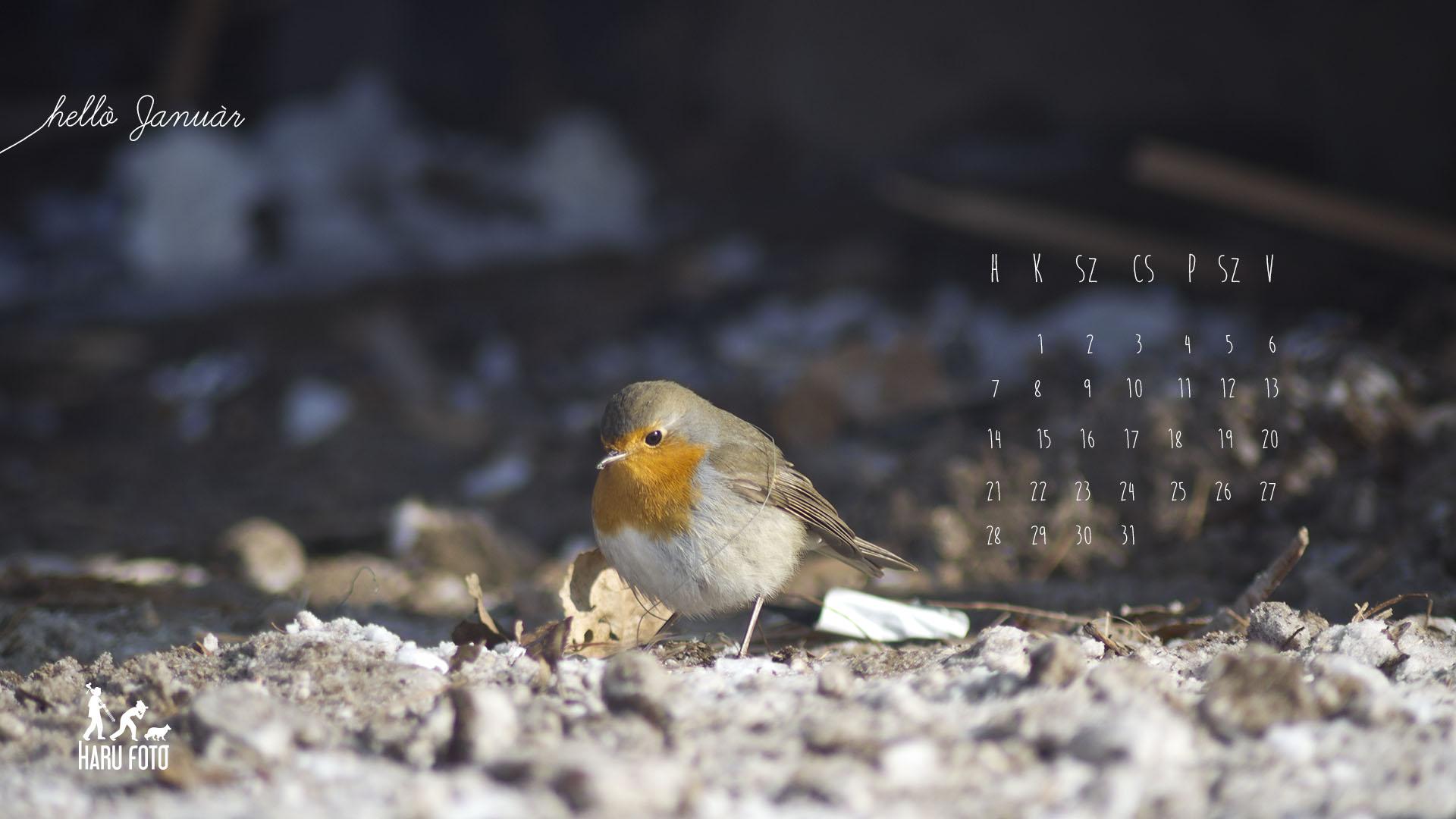 naptár háttérnek januári naptár, wallpaper | Harufoto a kreatív műhely naptár háttérnek