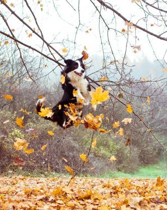harufoto autumn