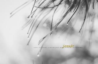 téli fotózás a malomvölgyi tónál