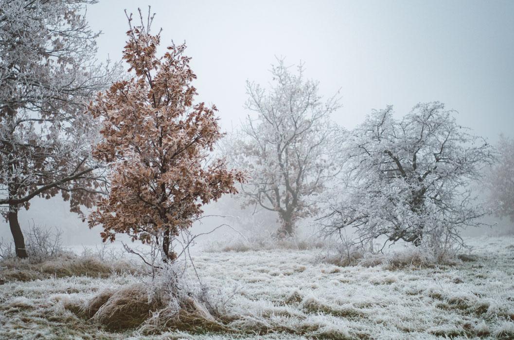 téli fotózás